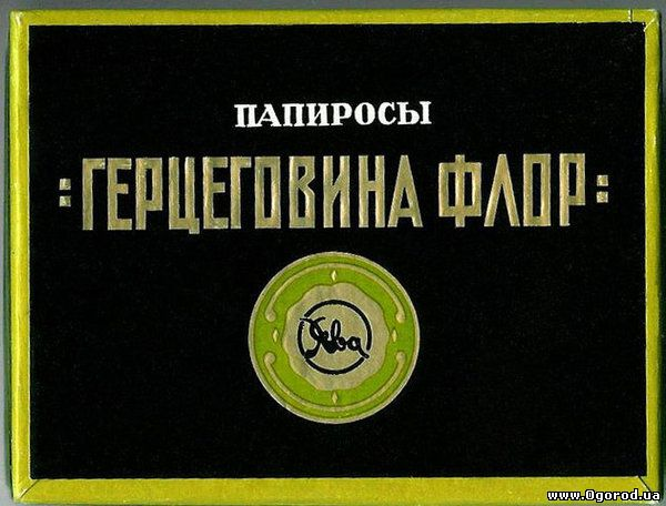 "Сигареты ""Герцеговина Флор"""